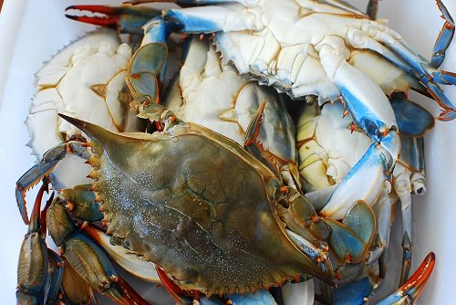 blue crabs - A Few of My Favorite Things This Summer