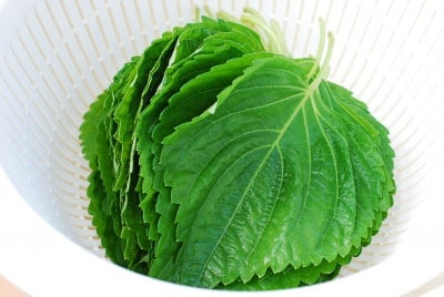 Kkaennip Jjim (Steamed Perilla Leaves)