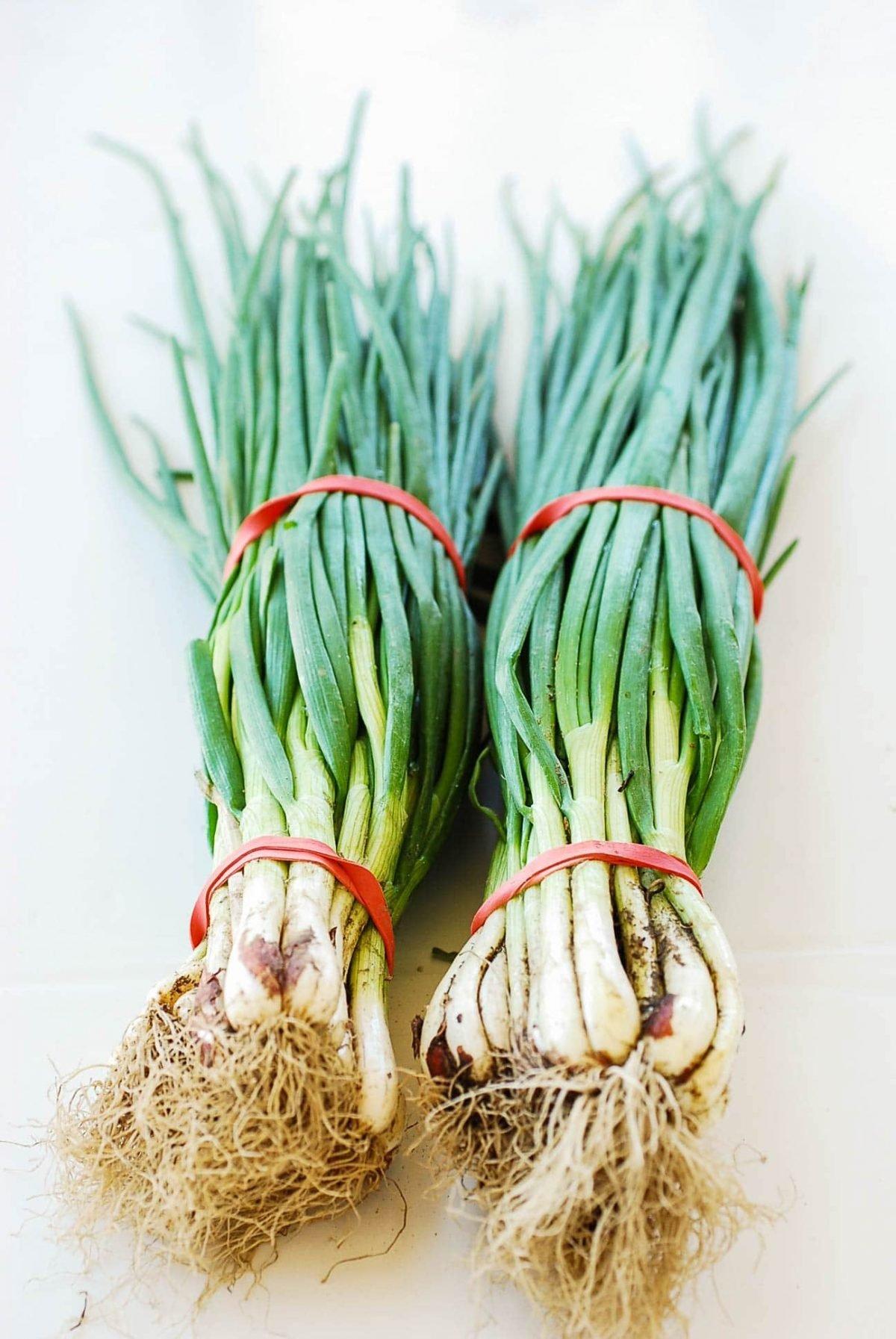 DSC 2701 e1618079950244 - Pa Kimchi (Green Onion Kimchi)